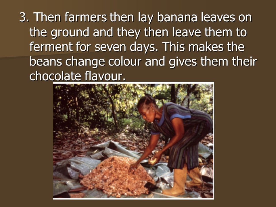 3. Then farmers then lay banana leaves on the ground and they then leave them to ferment for seven days. This makes the beans change colour and gives