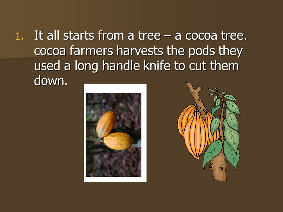 1. It all starts from a tree – a cocoa tree.