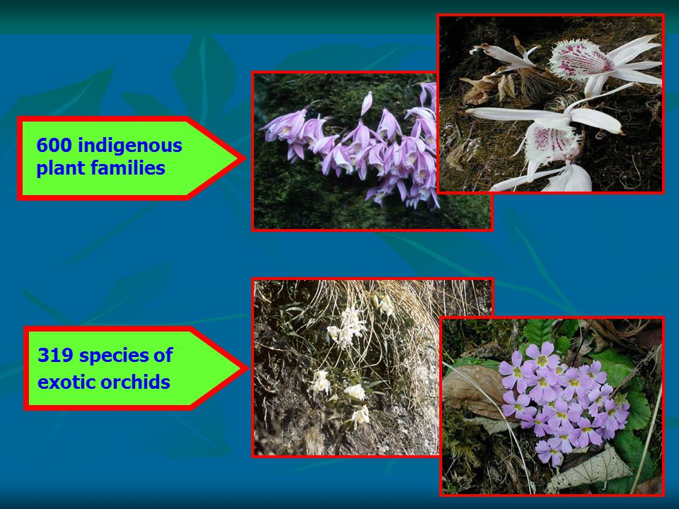 600 indigenous plant families 319 species of exotic orchids