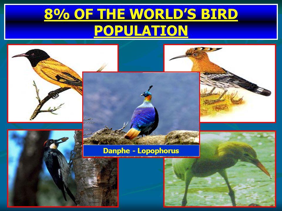 8% OF THE WORLD'S BIRD POPULATION Danphe - Lopophorus