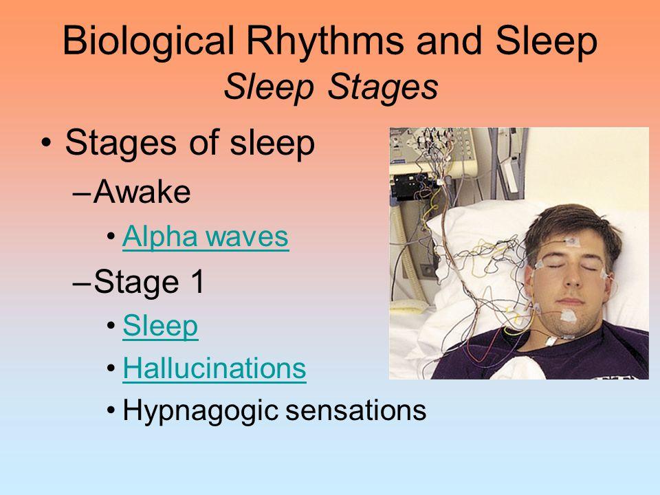 Biological Rhythms and Sleep Sleep Stages Stages of sleep –Stage 2 Sleep spindles –Stage 3 –Stage 4 Delta waves –REM sleepREM sleep