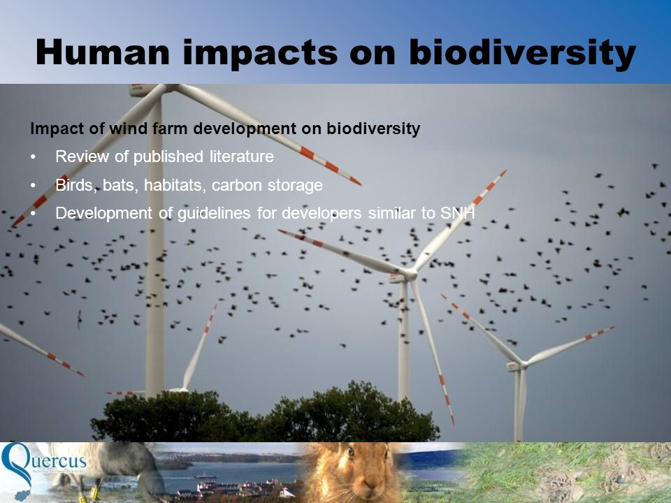 Human impacts on biodiversity Impact of wind farm development on biodiversity Review of published literature Birds, bats, habitats, carbon storage Development of guidelines for developers similar to SNH