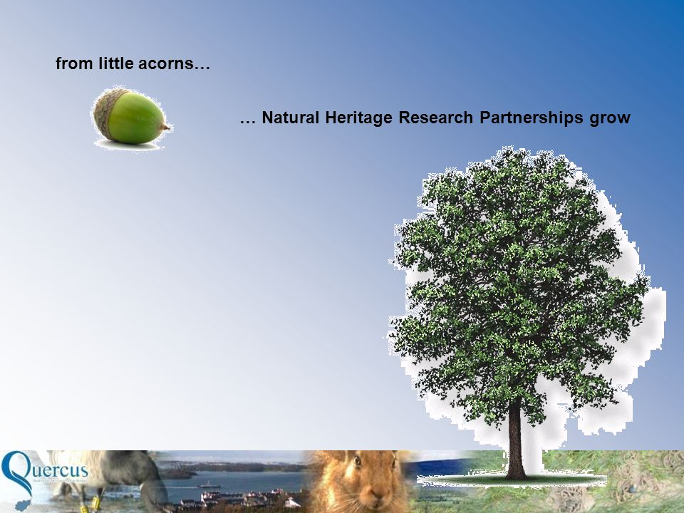 from little acorns… … Natural Heritage Research Partnerships grow