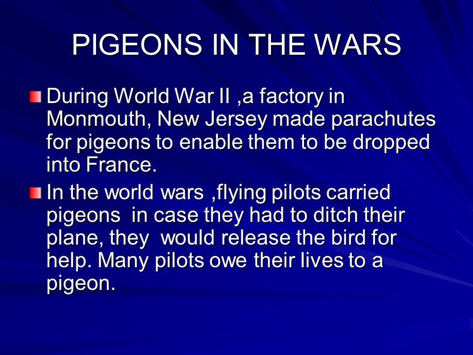 PIGEON HEROES BY NATALY, NATHAN, SIERRA.