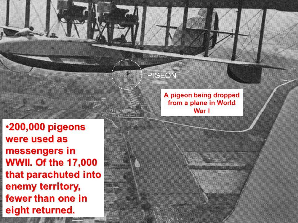 WHAMMMMMM!!!!!!!!!!!!!!! Parachuting Pigeons Spy Pigeons Navy Pigeons Tank Pigeons