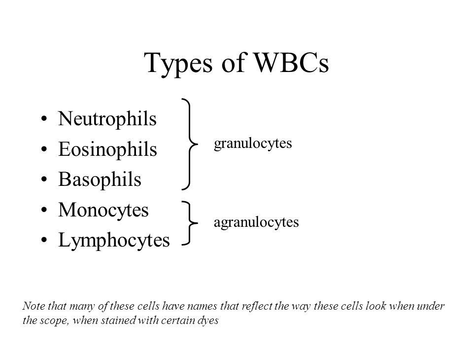 Types of WBCs Neutrophils Eosinophils Basophils Monocytes Lymphocytes granulocytes agranulocytes Note that many of these cells have names that reflect