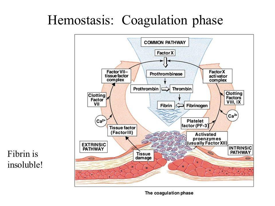 Hemostasis: Coagulation phase Fibrin is insoluble!