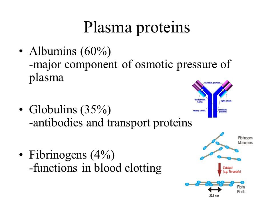 Plasma proteins Albumins (60%) -major component of osmotic pressure of plasma Globulins (35%) -antibodies and transport proteins Fibrinogens (4%) -functions in blood clotting
