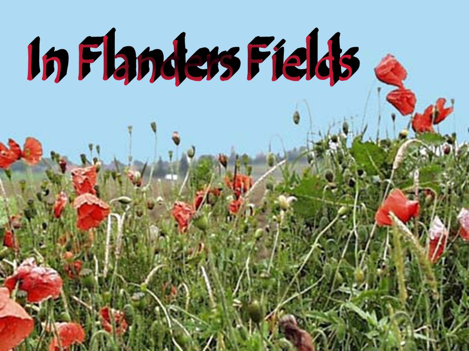 though poppies grow in Flanders Fields.