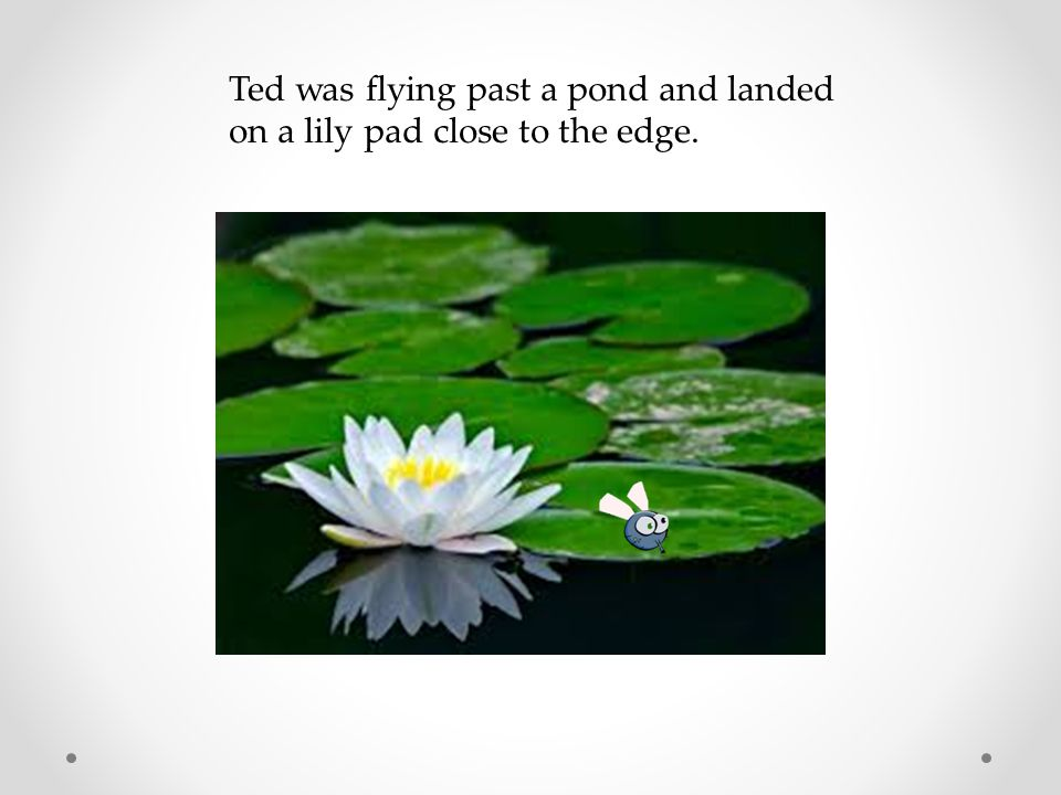 Ted was flying past a pond and landed on a lily pad close to the edge.