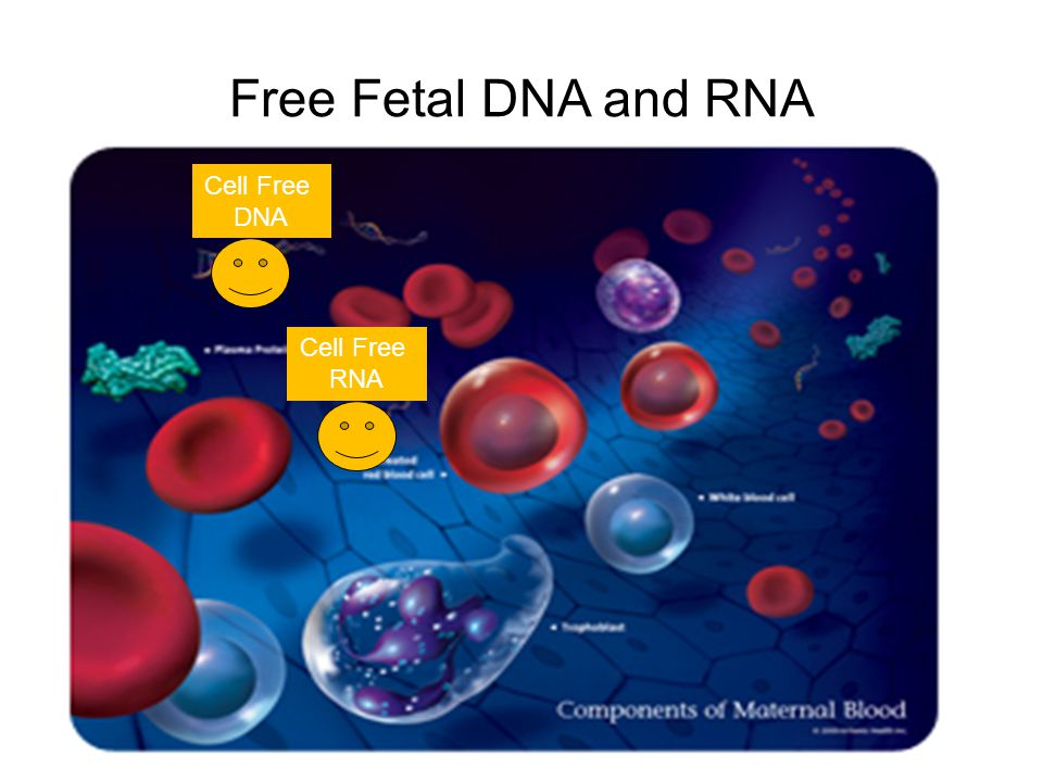 Free Fetal DNA and RNA Cell Free DNA Cell Free RNA