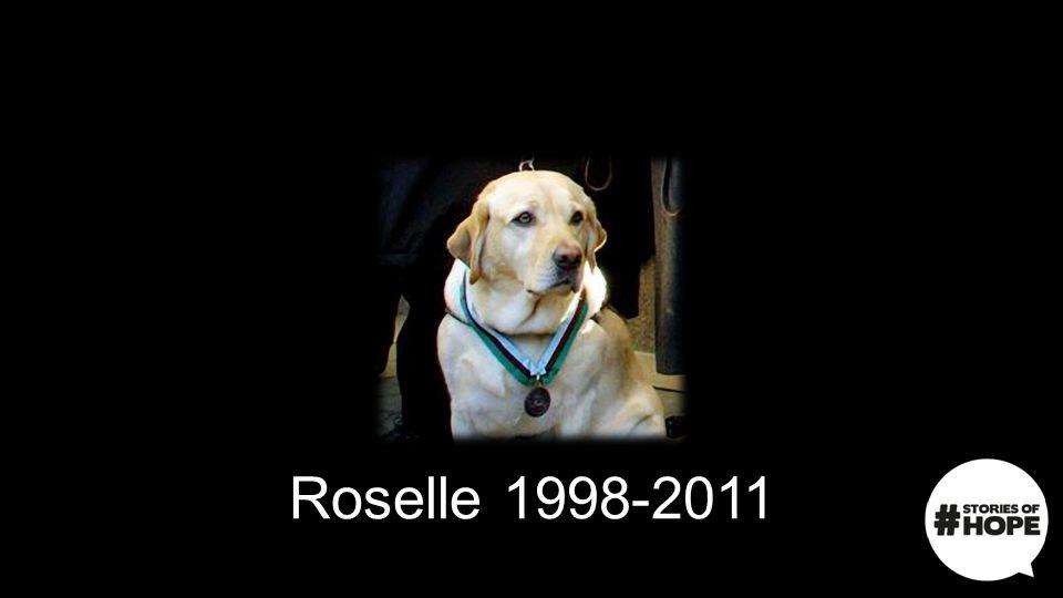 Roselle 1998-2011
