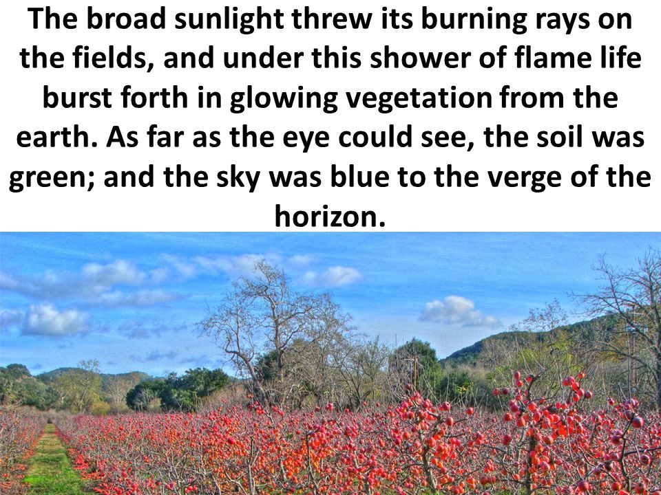 The broad sunlight threw its burning rays on the fields, and under this shower of flame life burst forth in glowing vegetation from the earth. As far