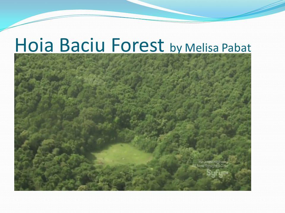Hoia Baciu Forest by Melisa Pabat