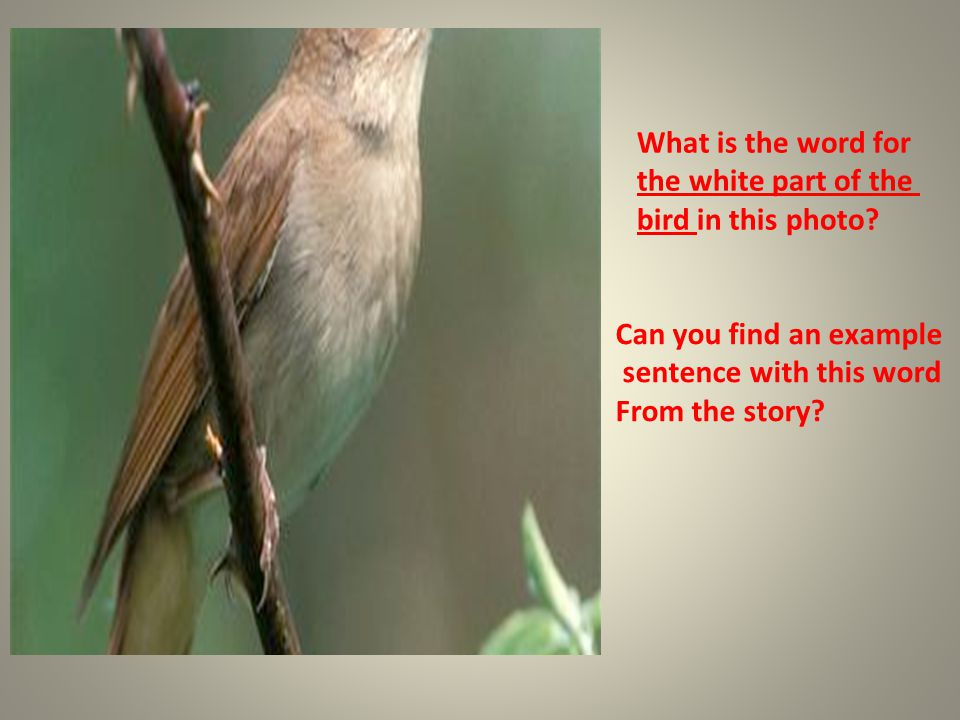 What is the word for the white part of the bird in this photo? Can you find an example sentence with this word From the story?