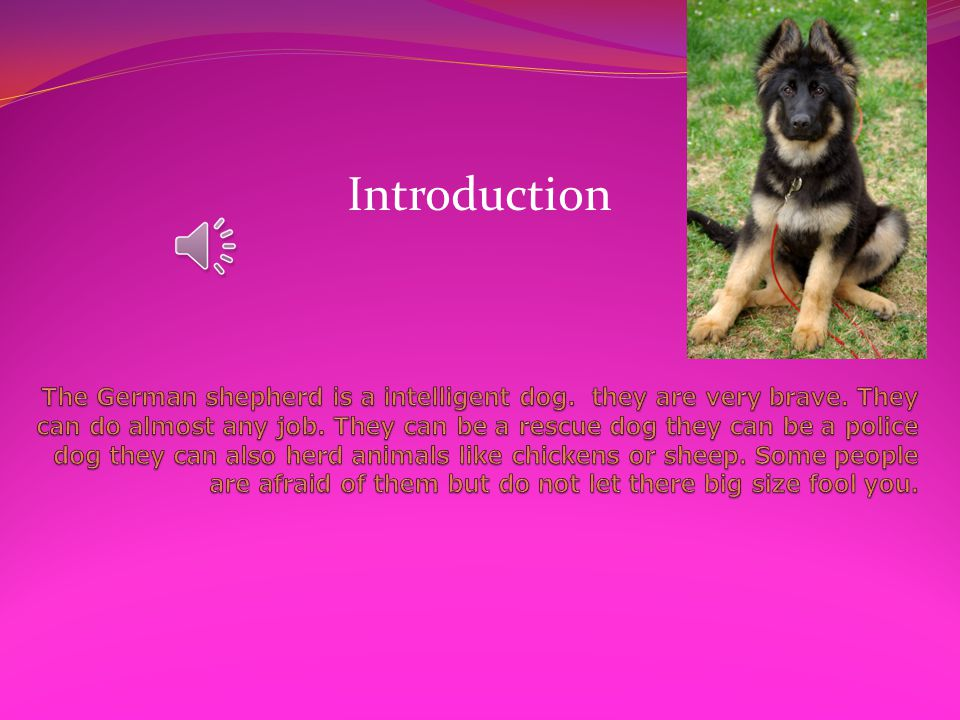 German Shepherd Dogs #10 Mrs. Butzin the main idea is German Shepherd Dogs By Rileigh King