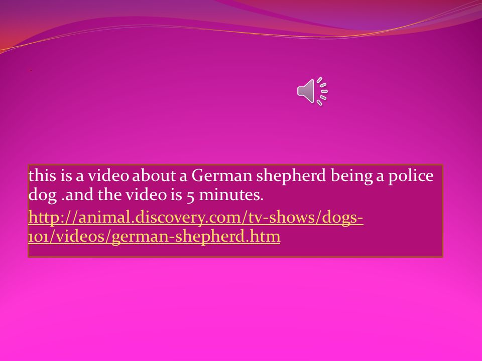 In Germany in the late 1800s a man named Max Von Stephanitz was interested in sheep herding dogs.