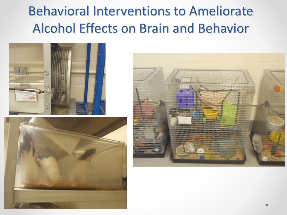 Behavioral Interventions to Ameliorate Alcohol Effects on Brain and Behavior