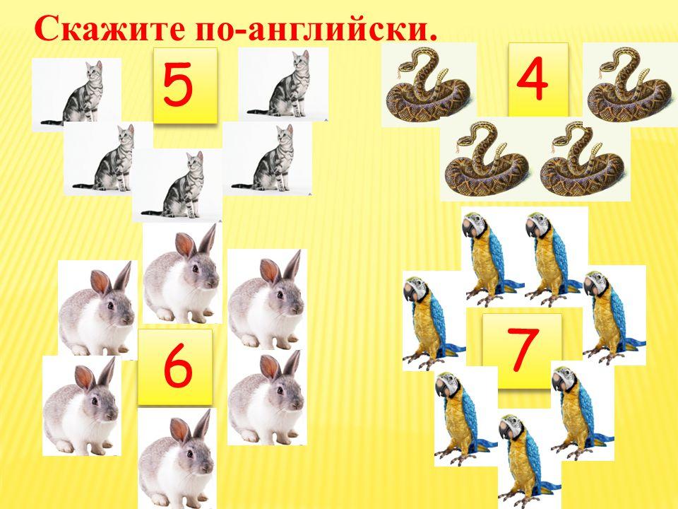2+4=6 5+3=8 5+3=8 1+6=77+2=9