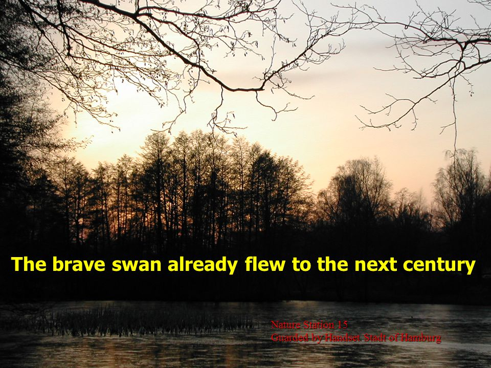 The brave swan already flew to the next century Nature Station 15 Guarded by Handset Stadt of Hamburg