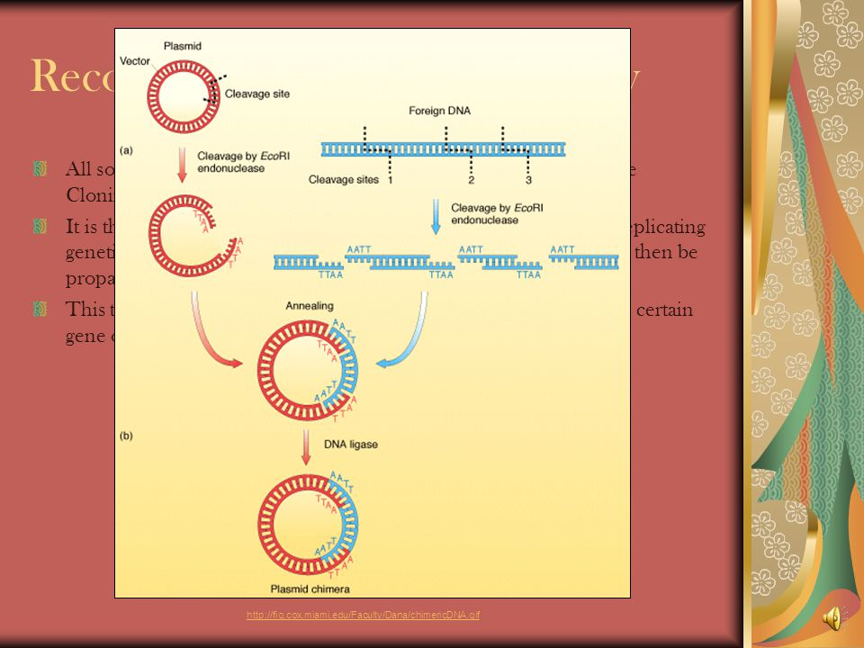 The Different Types of Cloning There are 2 Types of Cloning Natural Clones – Clones that occur naturally such as twins Artificial Clones – Clones that are created in science and labs There are 3 Types of Artificial Cloning Recombinant DNA Technology Reproductive Cloning Therapeutic Cloning http://oxleylearning.org/germandictionary/wp-content/uploads/2008/10/twins2.jpg