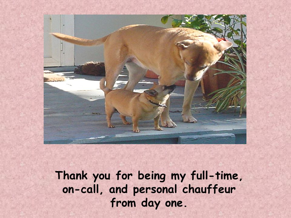 Thank you for being my full-time, on-call, and personal chauffeur from day one.