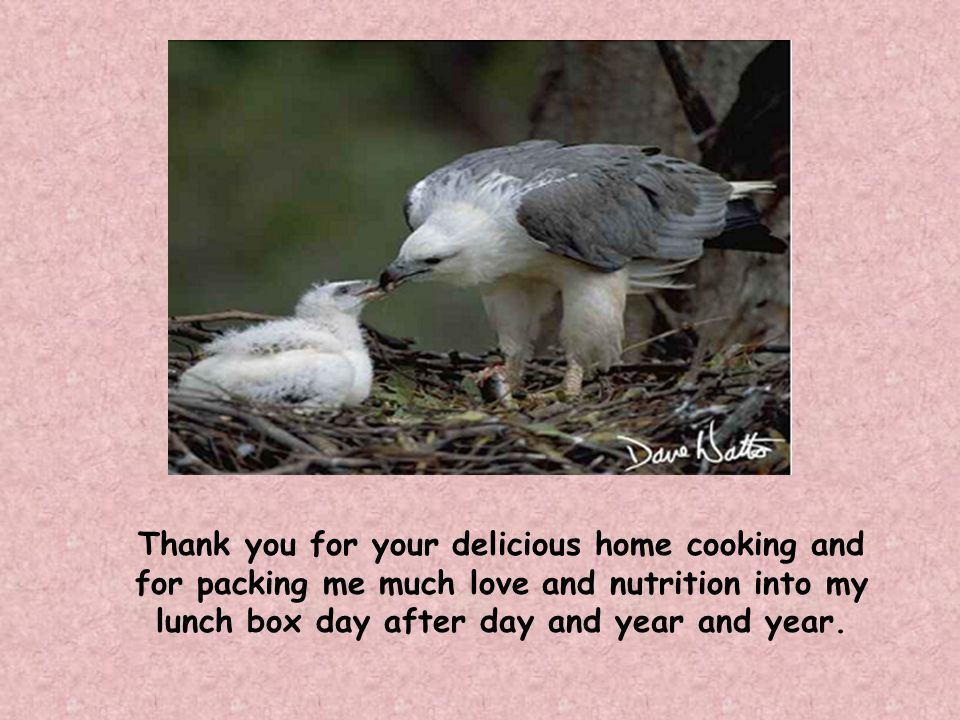 Thank you for your delicious home cooking and for packing me much love and nutrition into my lunch box day after day and year and year.