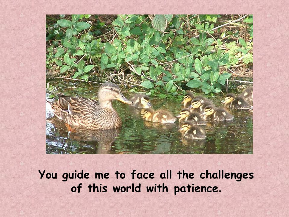 You guide me to face all the challenges of this world with patience.