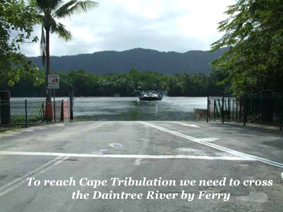 To reach Cape Tribulation we need to cross the Daintree River by Ferry
