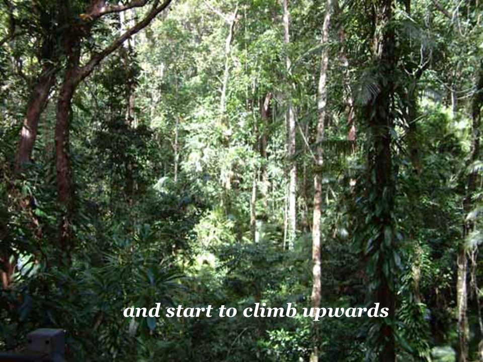 and start to climb upwards