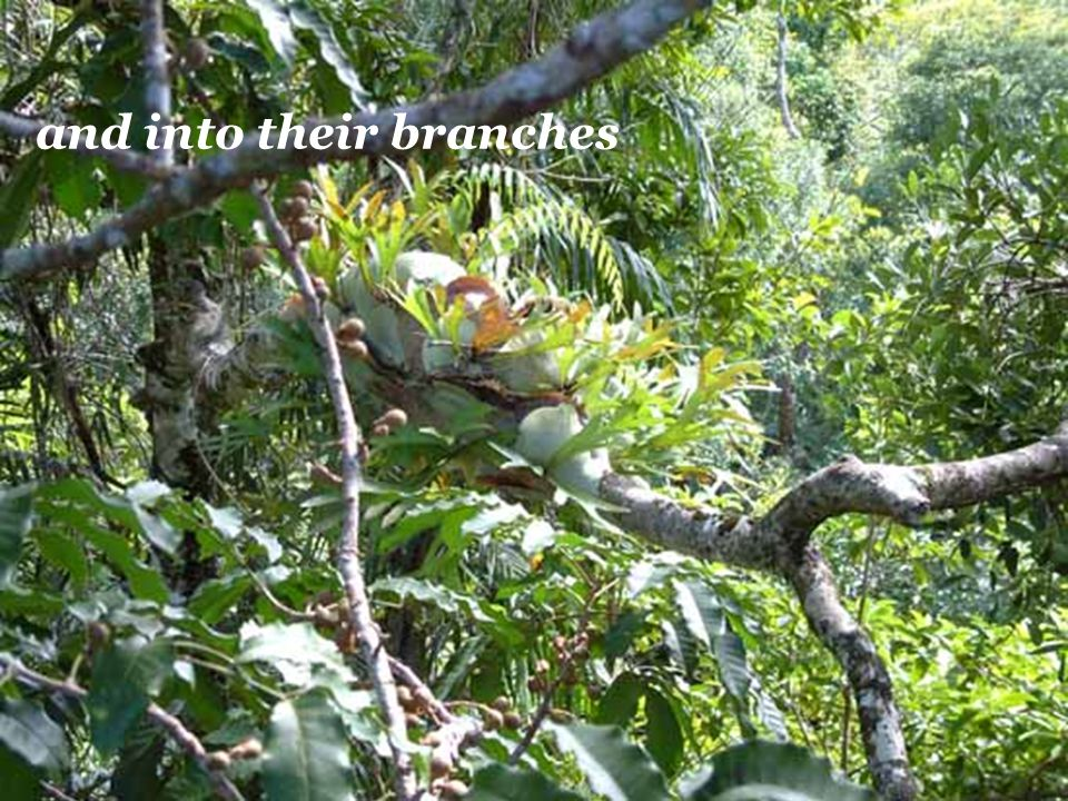 and into their branches
