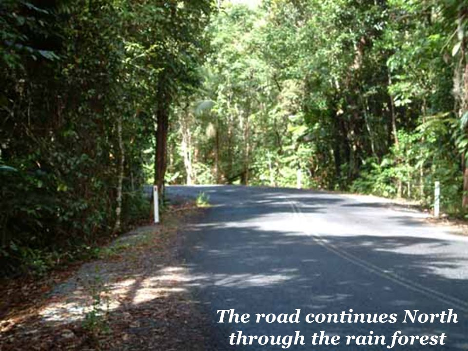 The road continues North through the rain forest