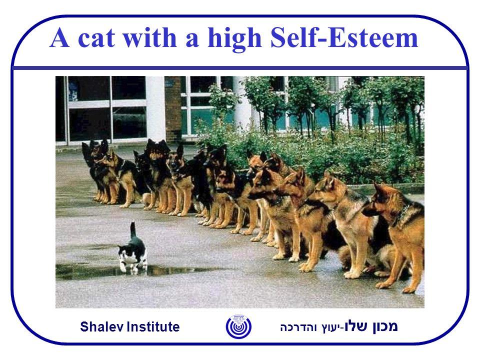 מכון שלו -יעוץ והדרכה Shalev Institute A cat with a high Self-Esteem