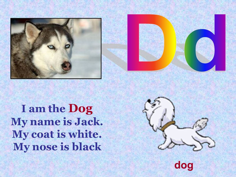 I am the Dog My name is Jack. My coat is white. My nose is black dog