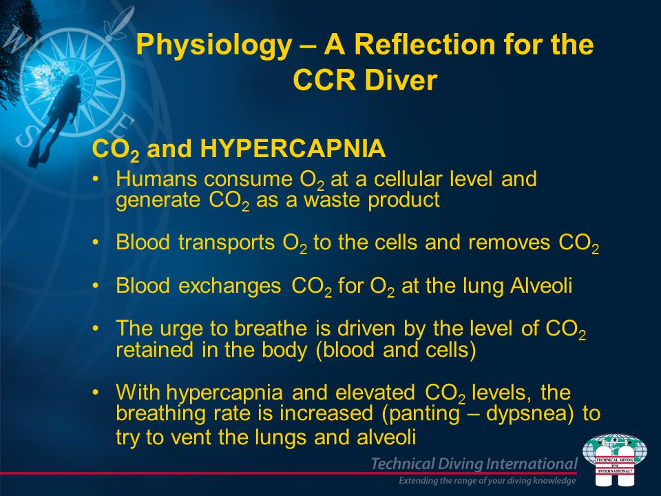 CO 2 and HYPERCAPNIA Humans consume O 2 at a cellular level and generate CO 2 as a waste product Blood transports O 2 to the cells and removes CO 2 Blood exchanges CO 2 for O 2 at the lung Alveoli The urge to breathe is driven by the level of CO 2 retained in the body (blood and cells) With hypercapnia and elevated CO 2 levels, the breathing rate is increased (panting – dypsnea) to try to vent the lungs and alveoli Physiology – A Reflection for the CCR Diver