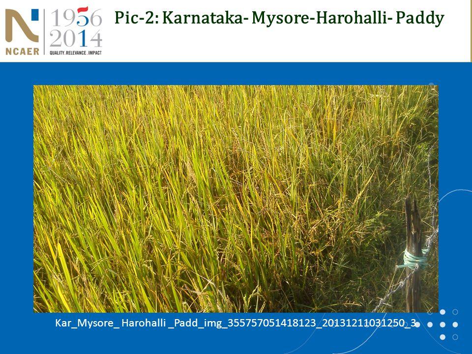 Pic-2: Karnataka- Mysore-Harohalli- Paddy