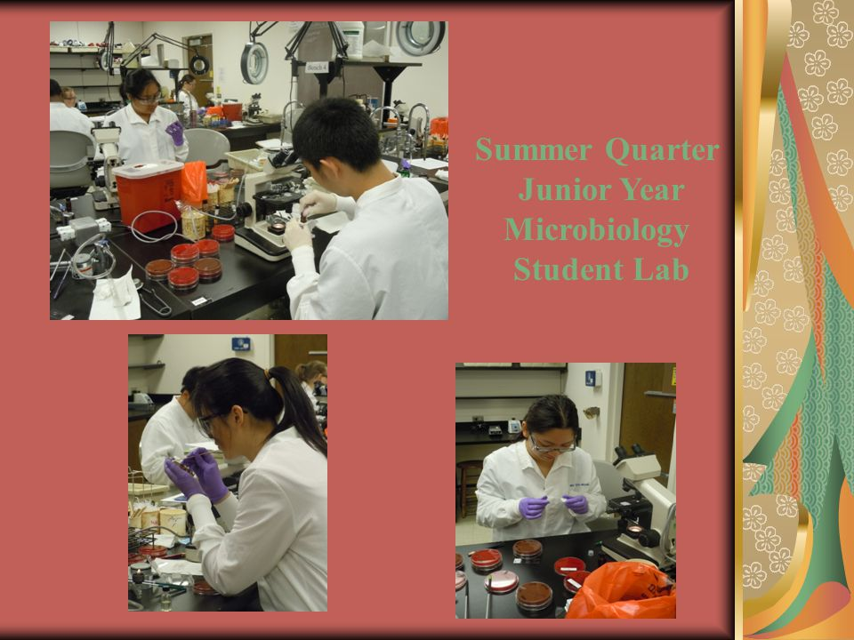Summer Quarter Junior Year Microbiology Student Lab