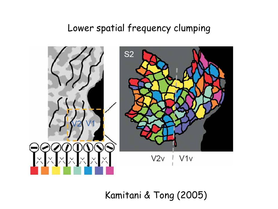 Kamitani & Tong (2005) Lower spatial frequency clumping