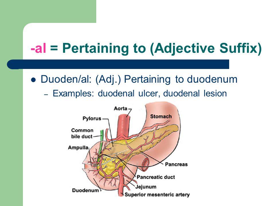 -al = Pertaining to (Adjective Suffix) Duoden/al: (Adj.) Pertaining to duodenum – Examples: duodenal ulcer, duodenal lesion