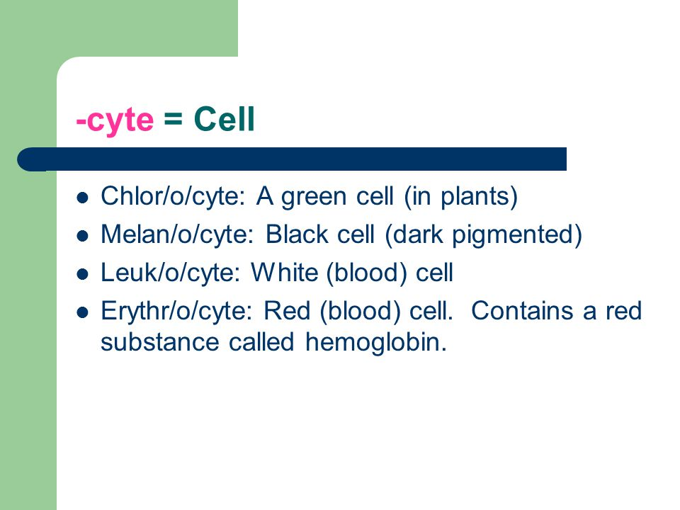 -cyte = Cell Chlor/o/cyte: A green cell (in plants) Melan/o/cyte: Black cell (dark pigmented) Leuk/o/cyte: White (blood) cell Erythr/o/cyte: Red (bloo
