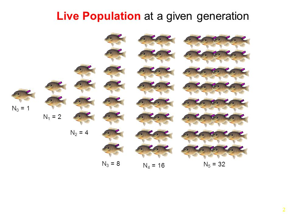 2 N 0 = 1 N 1 = 2 N 2 = 4 N 3 = 8 N 4 = 16 N 5 = 32 Live Population at a given generation