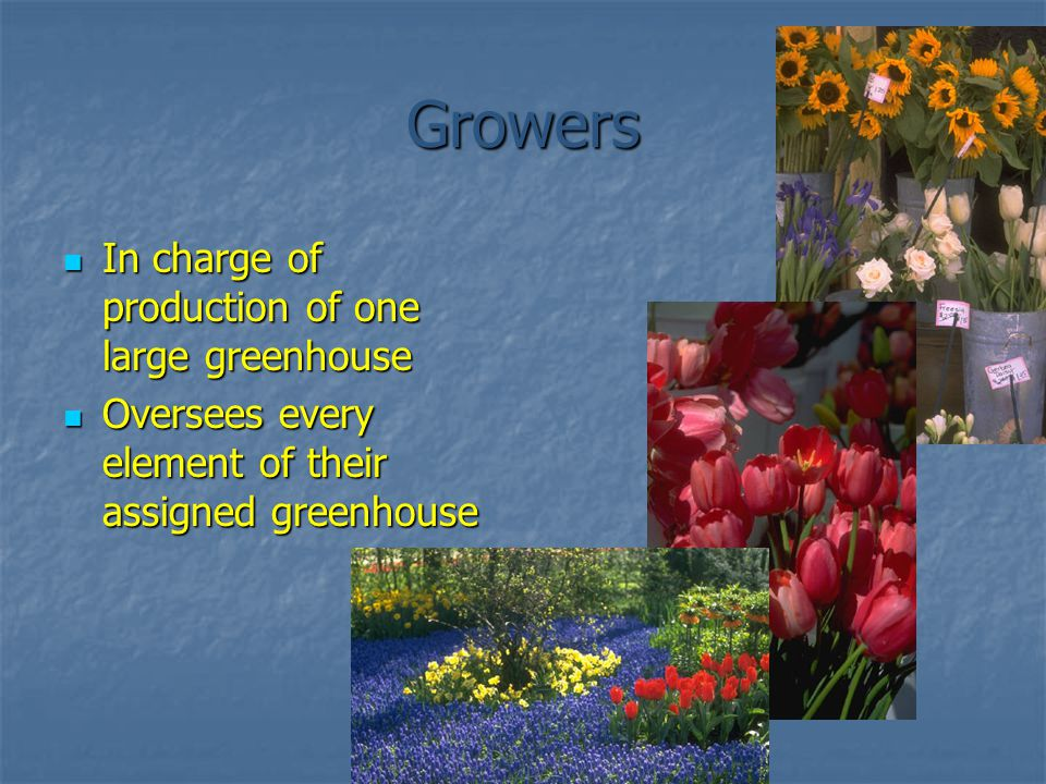 Growers In charge of production of one large greenhouse In charge of production of one large greenhouse Oversees every element of their assigned greenhouse Oversees every element of their assigned greenhouse