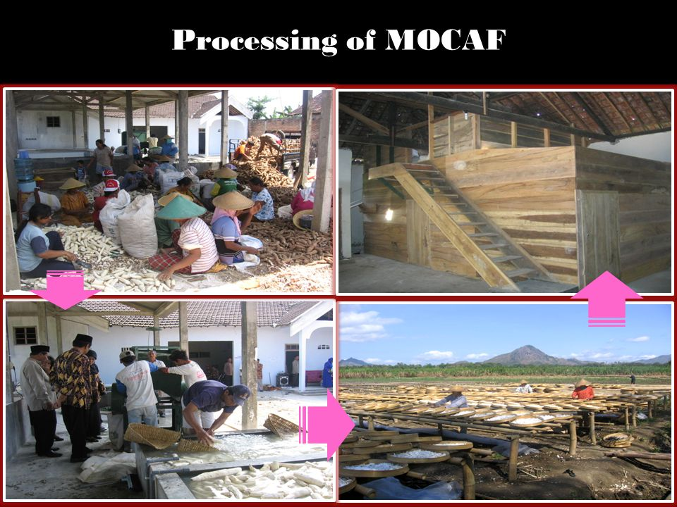 Processing of MOCAF