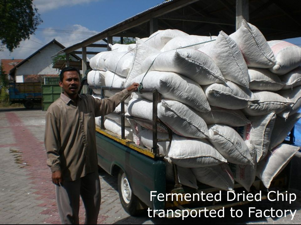 Fermented Dried Chip transported to Factory