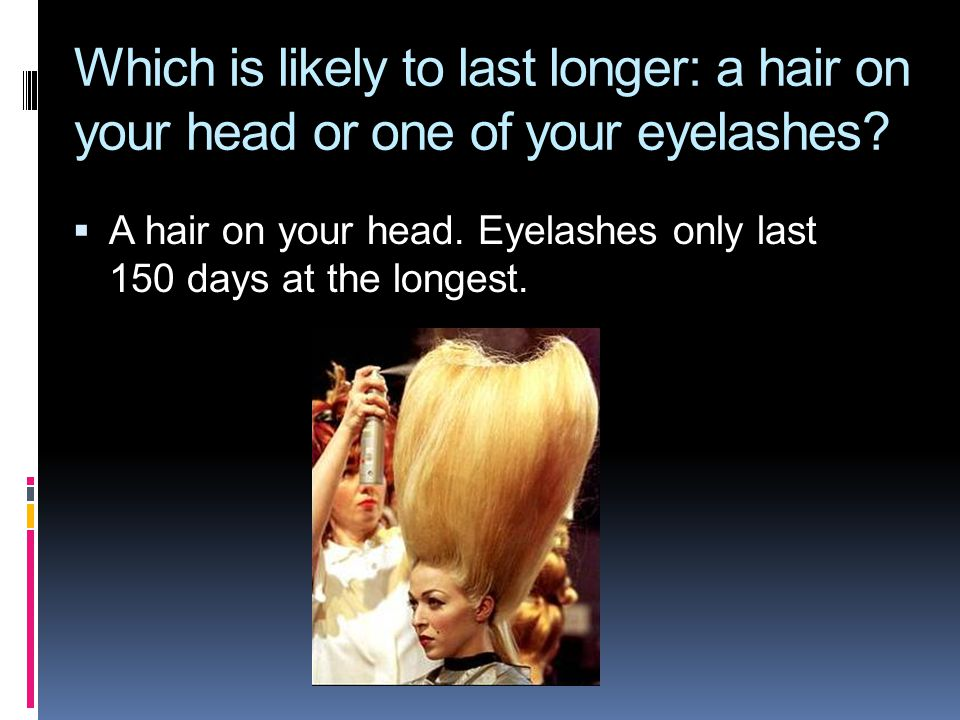  A hair on your head. Eyelashes only last 150 days at the longest.