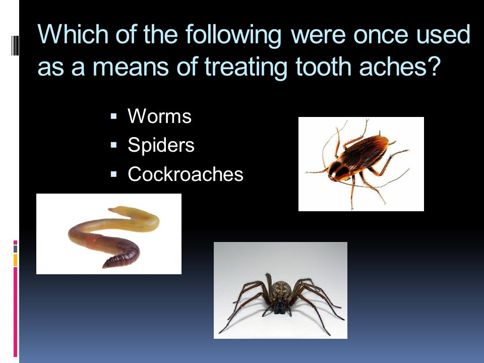 Which of the following were once used as a means of treating tooth aches?  Worms  Spiders  Cockroaches