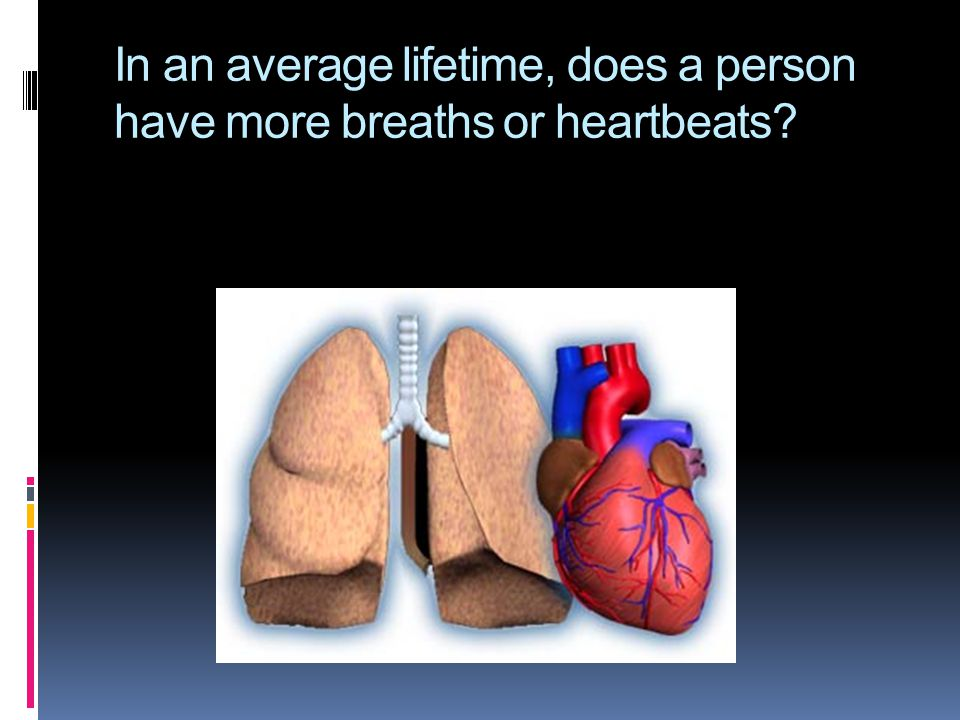 In an average lifetime, does a person have more breaths or heartbeats?