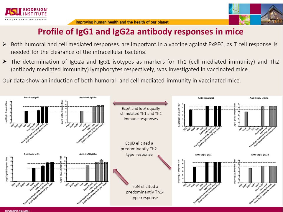 Profile of IgG1 and IgG2a antibody responses in mice  Both humoral and cell mediated responses are important in a vaccine against ExPEC, as T-cell response is needed for the clearance of the intracellular bacteria.