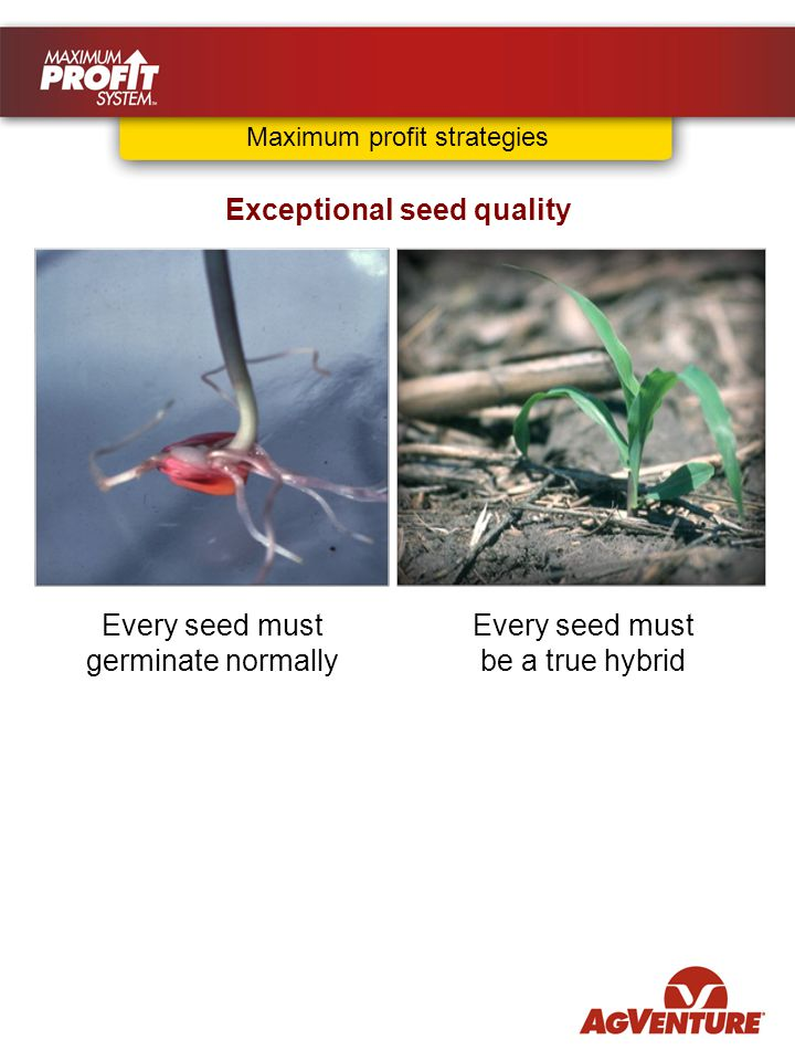 Every seed must be a true hybrid Exceptional seed quality Every seed must germinate normally Maximum profit strategies