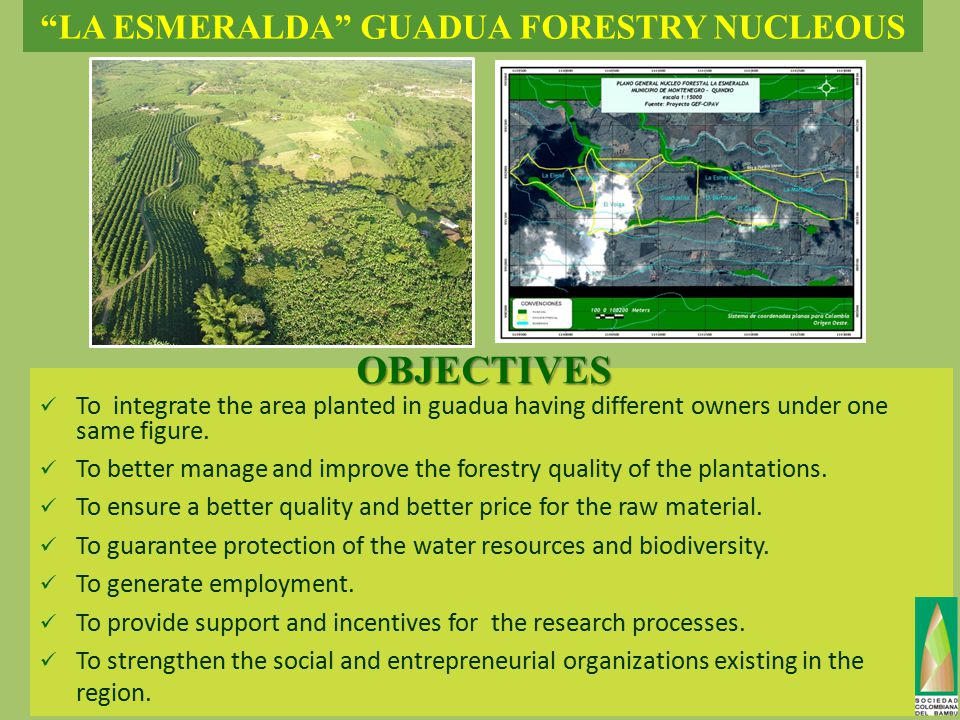 LA ESMERALDA GUADUA FORESTRY NUCLEOUS To integrate the area planted in guadua having different owners under one same figure.